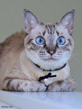 ネコと私のお揃いパールアクセサリー【WHITE】