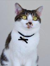 ネコと私のお揃いパールアクセサリー【PINK】
